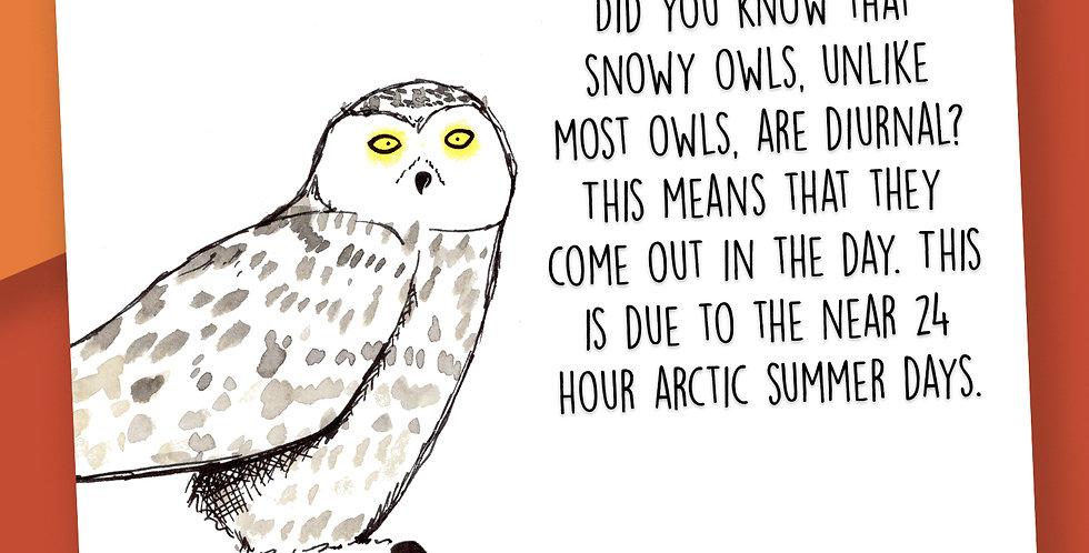50x Snowy Owl Fact Postcards