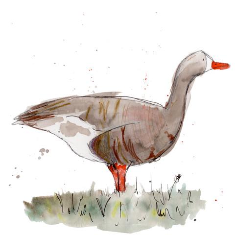 White fronted goose web .jpg