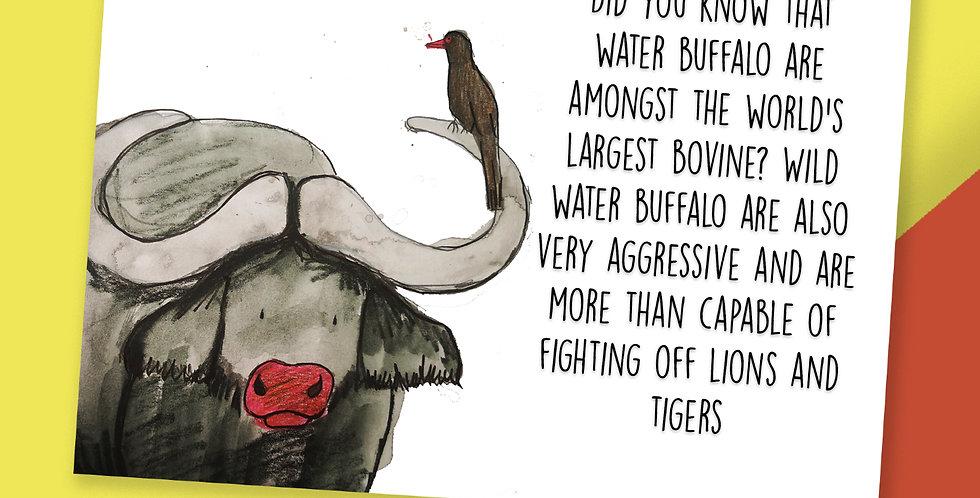 50x Buffalo Fact Postcards