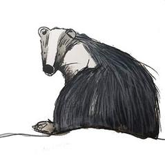 badger-min.jpg