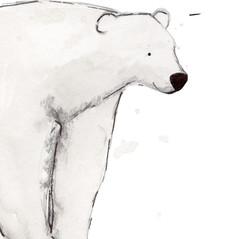 Polar Bear .jpg
