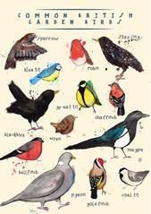 Common British Birds