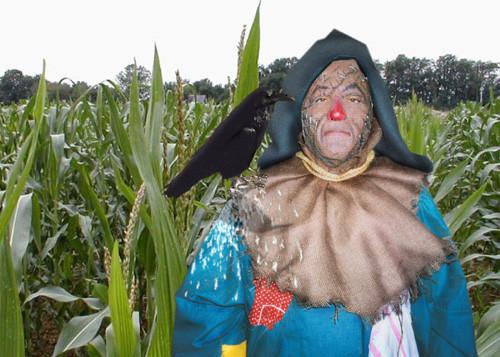 dp_scarecrow_lg.jpg