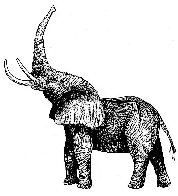 elephant_lg.jpg