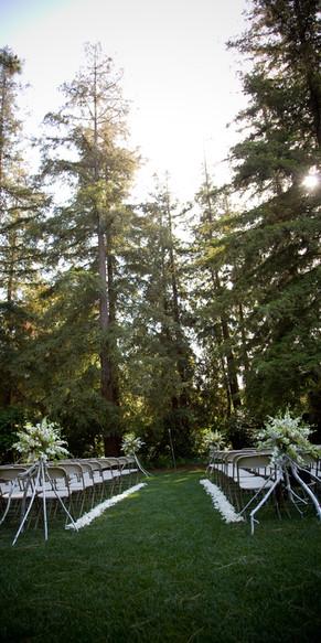 Redwoods Ceremony BackGround
