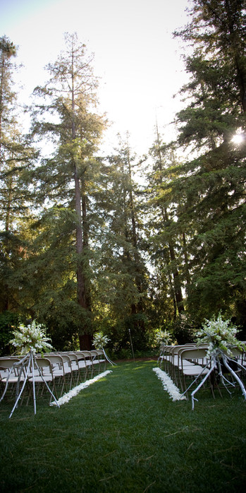 Redwoods Ceremony BackGround