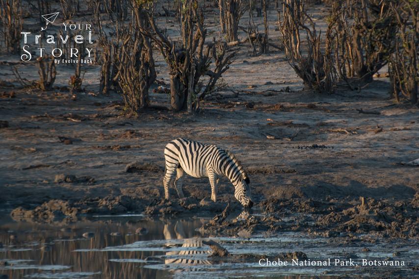Chobe National Park, Botswana | Photo: Jose Ramapuram