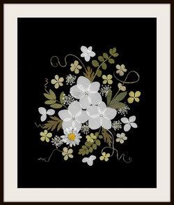 White Hydrangea on Black