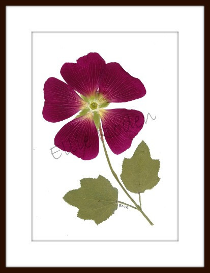 Hollyhock, Pressed Flowers Print by Vermont Pressed Flowers