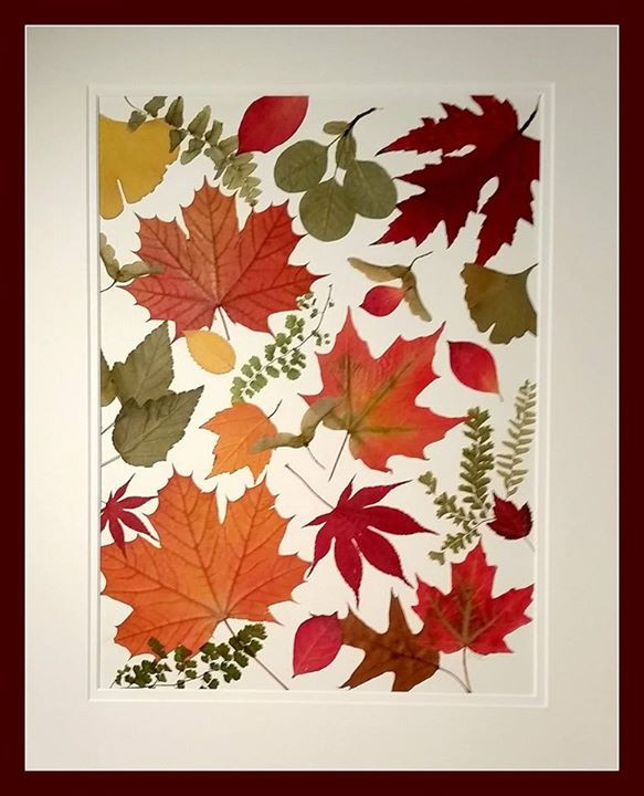 pressed fall foliage by Ellie Roden Vermont
