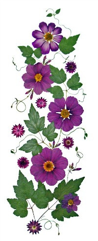 Example of a pressed flower original art piece by Ellie Roden