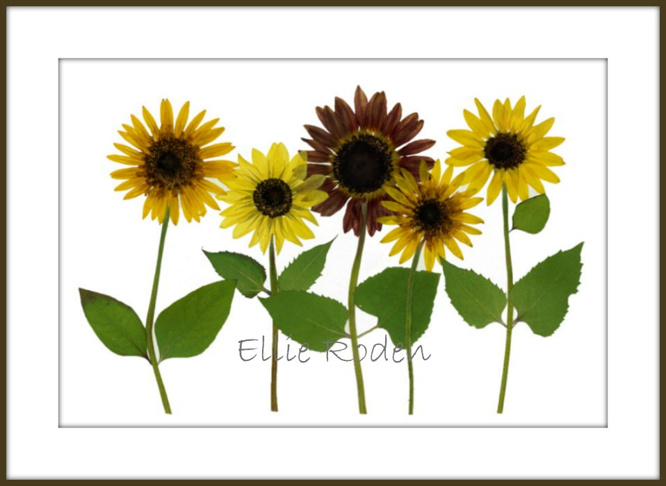 Five Sunflowers