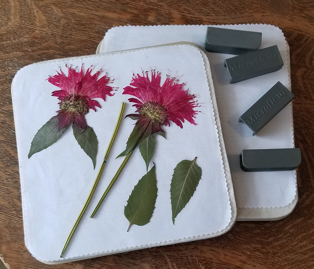 how to press bee balm with a microwave flower press