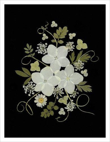 C34 - White Beauties