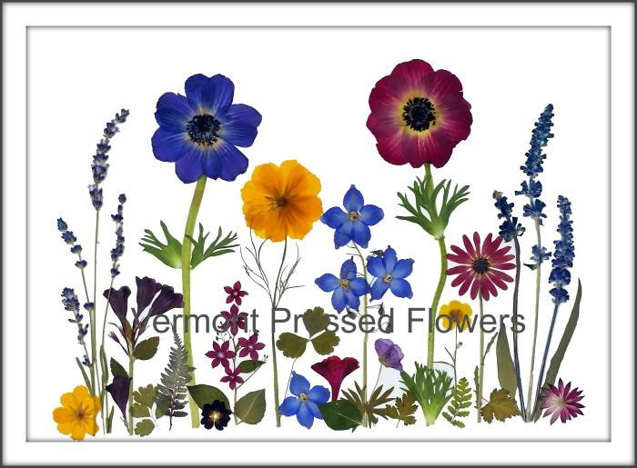 Pressed flower original from Vermont Pressed Flowers