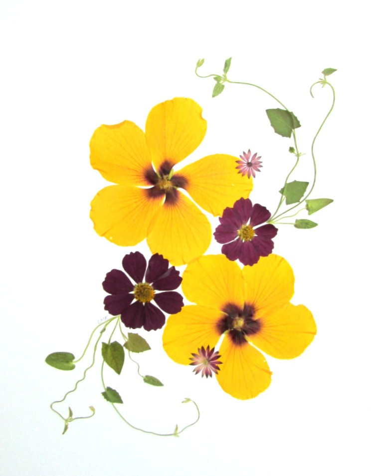 Pressed flower card with yellow flowers