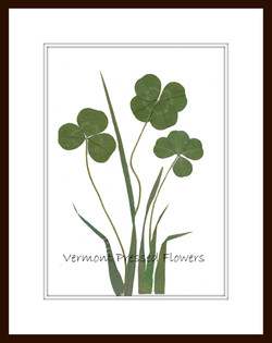 Four Leaf Clovers