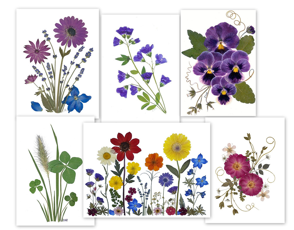 pressed flower note cards by Vermont pressed flowers