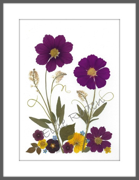 Original pressed flowers featuring two cosmos