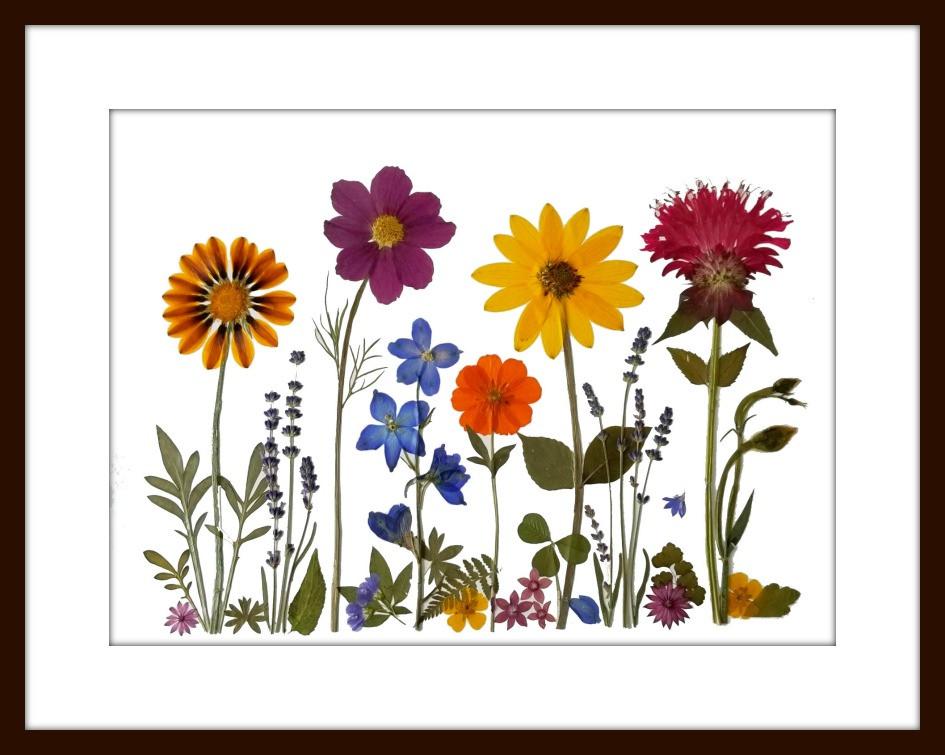 pressed flower art by Vermont Pressed Flowers