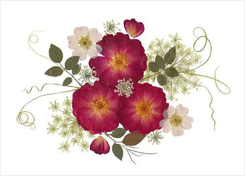C3 - Three Roses