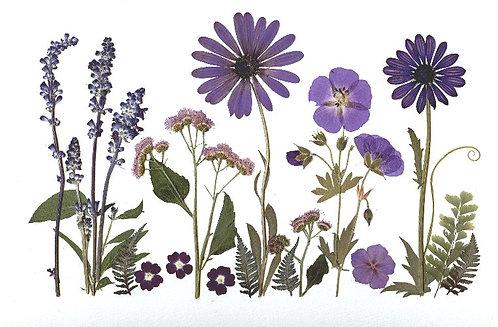 C40 - Purple Garden