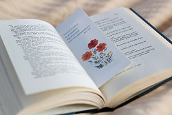 Ellie Roden - Pressed Flower Bookmarks