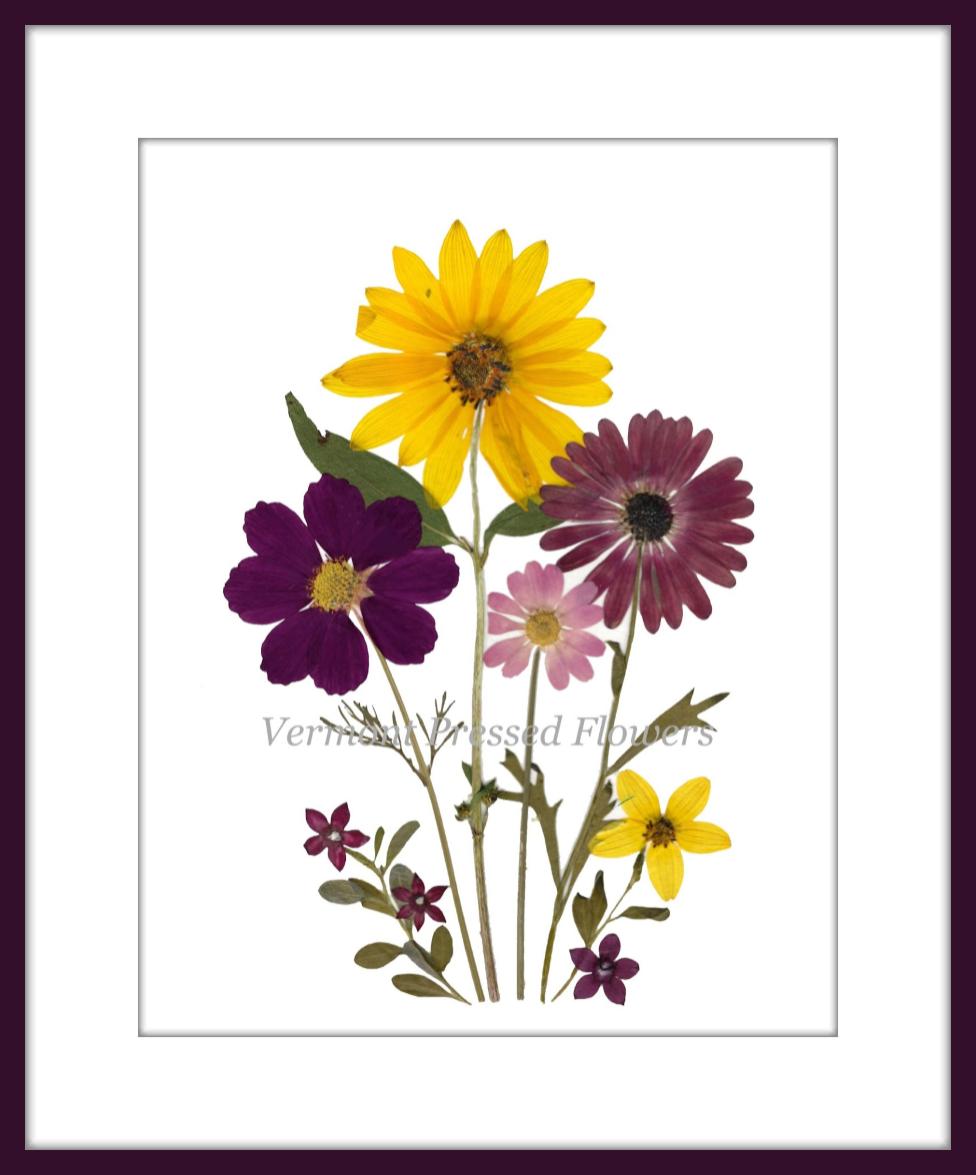 Vermont Pressed Flowers