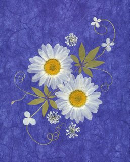 C43 - Daisies on Blue