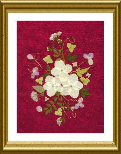 White Moth Hydrangea on Red