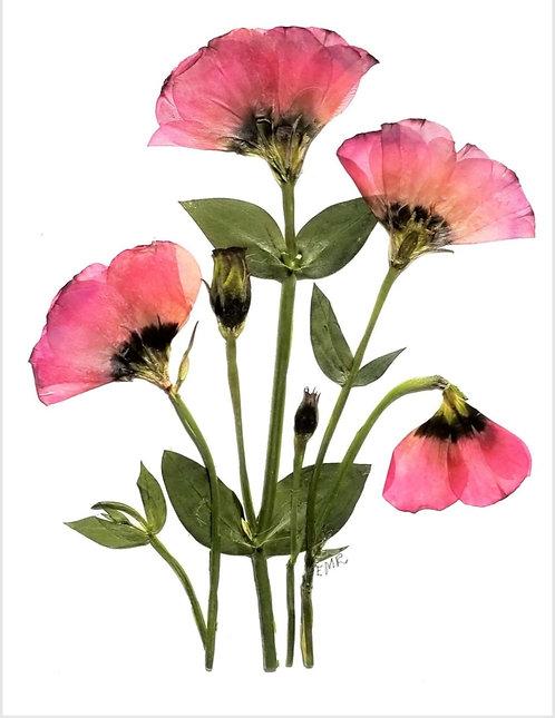 C53 - Pink Lisianthus