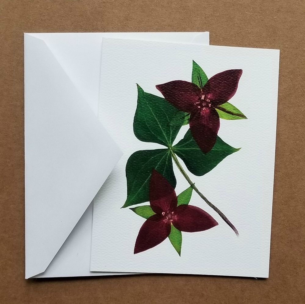 trillium pressed flower notecards
