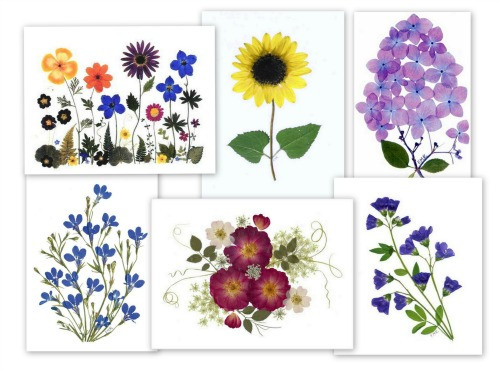 pressed flower notecards from vermont pressed flowers