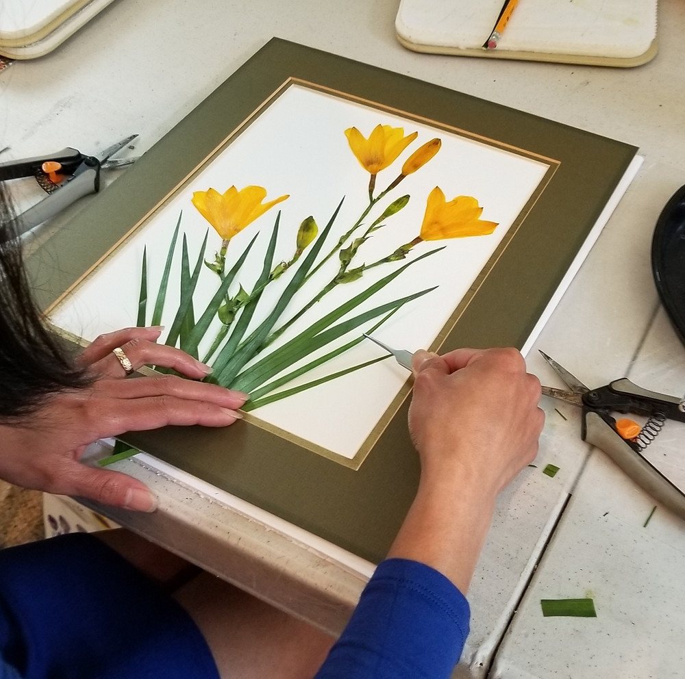 pressed flower daffodils by Ellie Roden