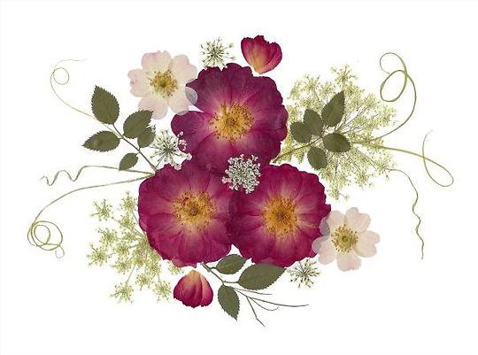 Vermont Pressed Flowers - 3 Roses