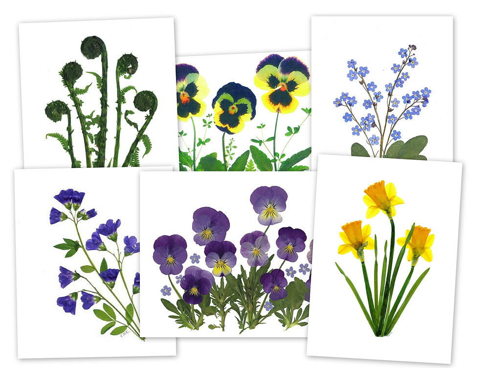 Pressed Flower Notecards by Vermont Pressed Flowers