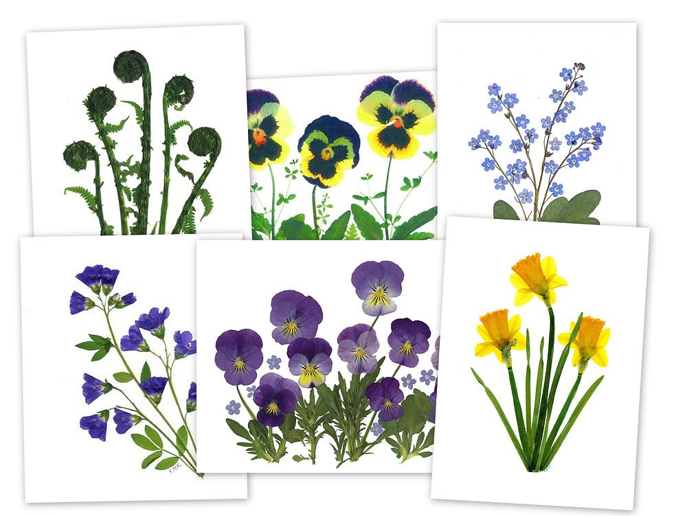 pressed flower cards, spring flowers