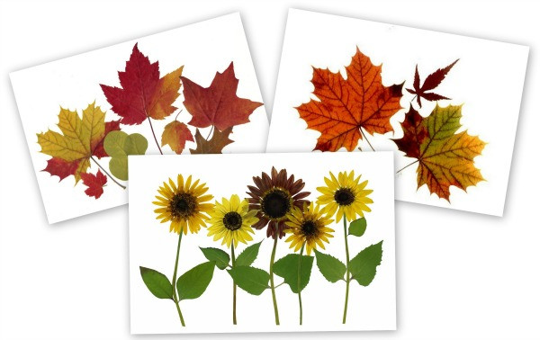 Picture of 3 pressed flower cards with autumn flowers