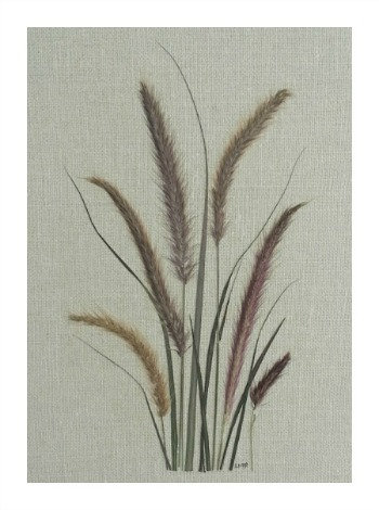 C41 - Ornamental Grasses