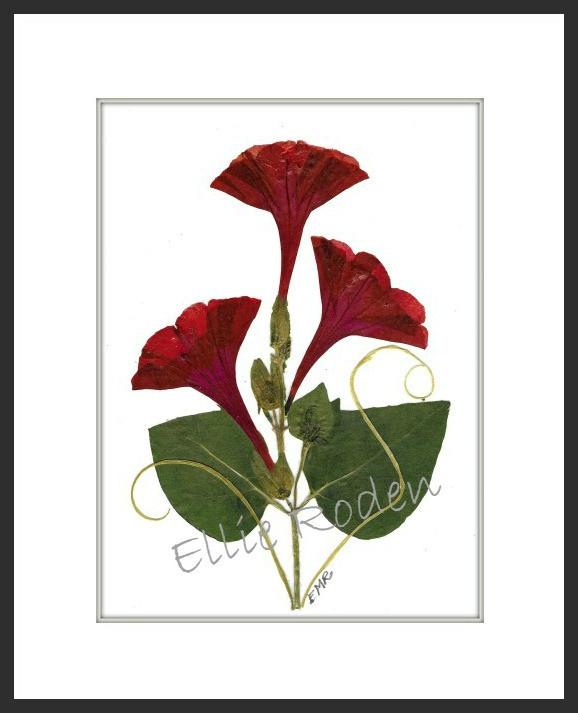 Pressed flower art, 4 o'clocks | VT Pressed Flowers