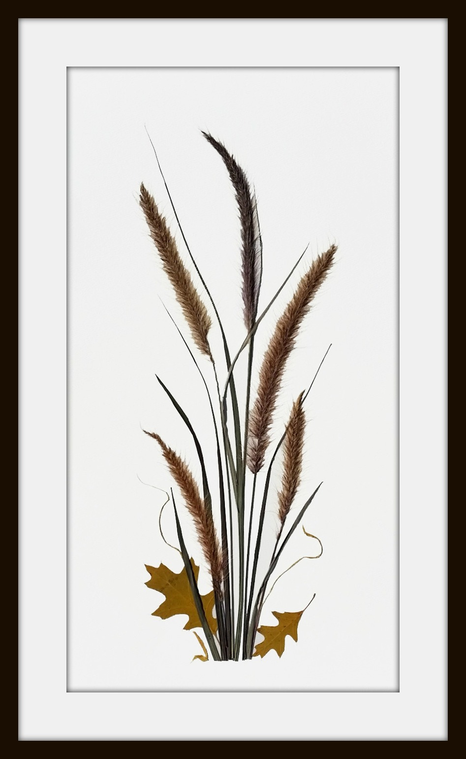 Grasses and oak leaves