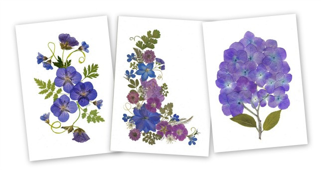 Three pressed flower cards with purple flowers