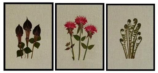Pressed flowers on fabric - jack-in-the-pulpit, monarda, fiddleheads