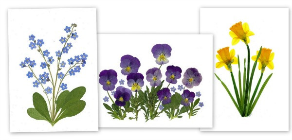 Set of 3 pressed flower cards from Vermont Pressed Flowers