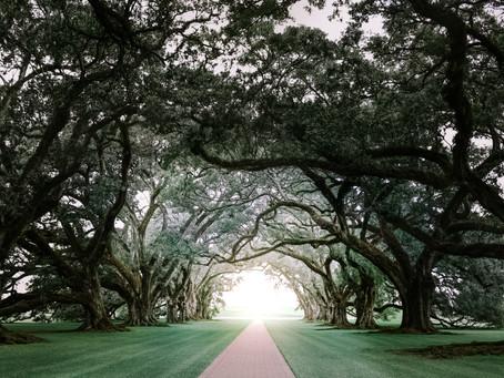 A Walk through Destrehan Plantation