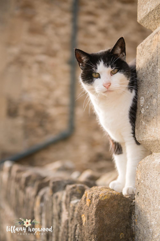 Cat in Lacock