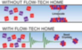 Seedcrystals_no tan.png