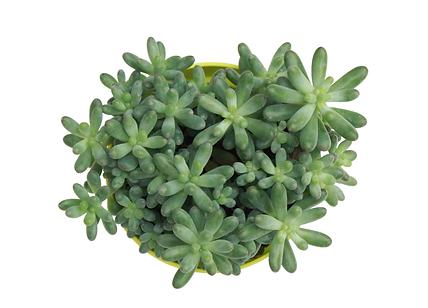 greeen succlent plant