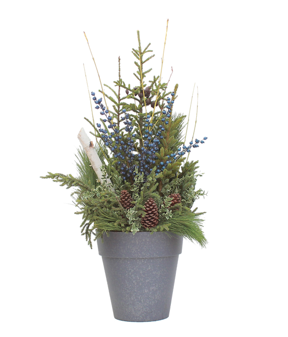 Spruce Tip Container with blueberries