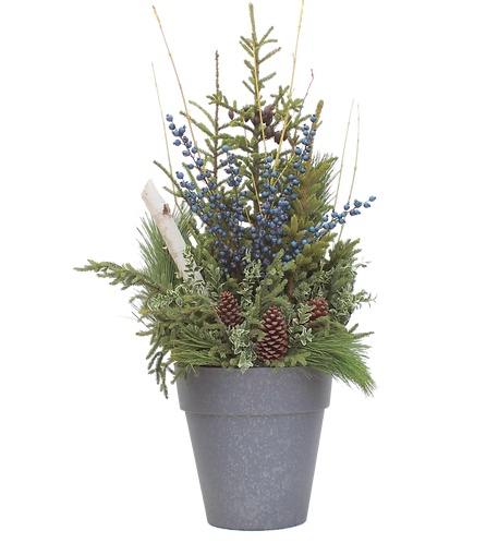 """14"""" Spruce Tip Container-Blueberry"""